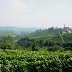 Hills and vineyars (Castiglione Tinella)