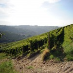 Langhe hills and vineyards