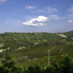 Langhe hills on summer