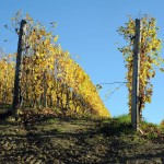 Langhe hills and vineyards in november