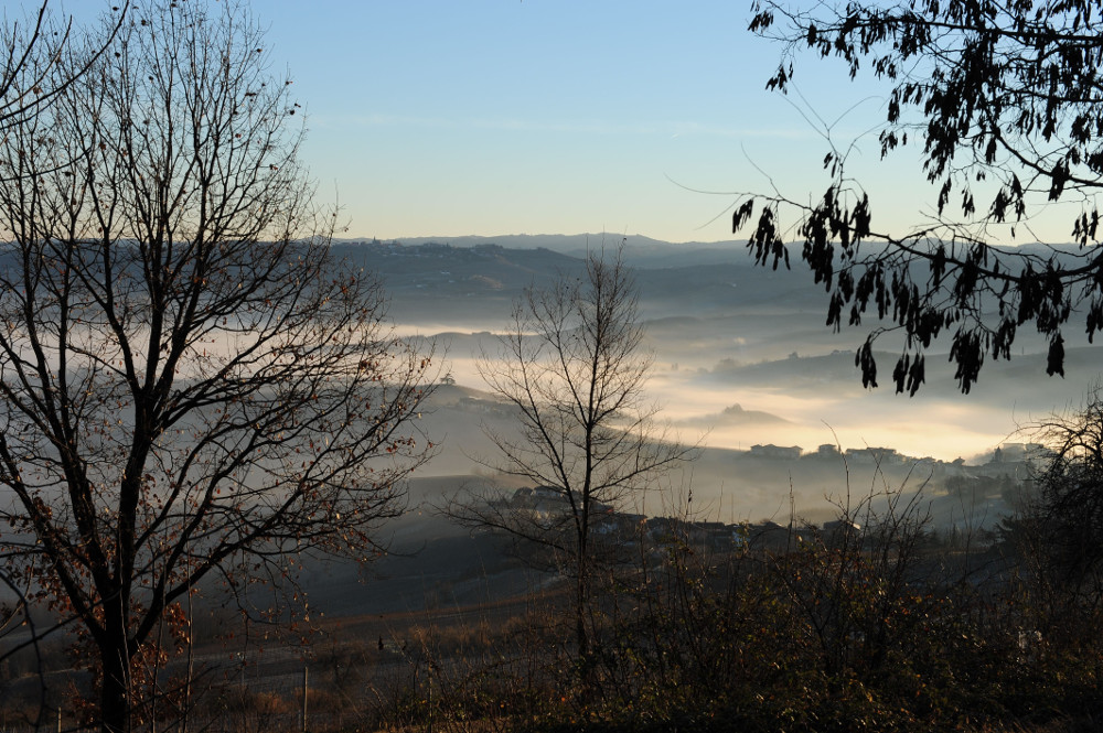 winter and fog landscape