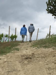 walk in the vineyards