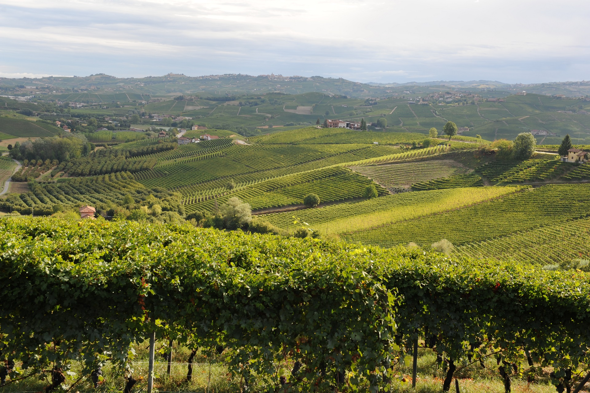 Vineyard in Langhe hills